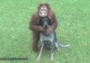 23 sıradışı dostluk videosu