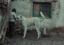 Sivas | Görüntü kalitesi : HD 720P - Dil : Yerli Film