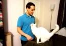 Sizin kediniz de size böyle sarılıyor mu?