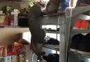 sizin kedinizin burcu ne acaba