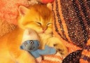 Sleeping cutie.