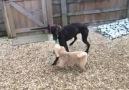 Slow motion tug of war with Doug and Lulu!