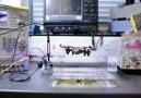 Sonsuza Dek Uçabilen Drone!