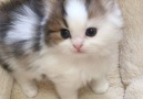 Such a cutie pie! (Credit instagram.commatatabinekohouse)