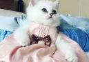 Such a pretty kitty!