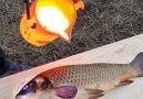 Taste Life - Lava vs Fish Facebook