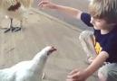 Tavuk çocuğa böyle sarıldı