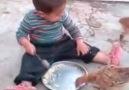Tavukların çocuğa yaptığına bakın )