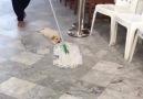 Temizlik yaparken hissettiğim... Köpek olan ben...