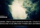 Tevhidi Paylaşım - Muhammed Taha Junaid Tahrim Suresi 6-9 Facebook