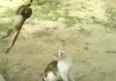 The cat and monkey friends