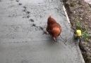 The chicken marks that will never be deletedvia Prestige Premix Concrete
