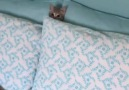 The cutest hide and seek youll see today!