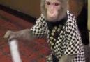 the monkey waiter walks on stilts (!!!)