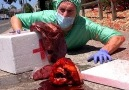 The Royal Stampede - Surgeon drops human body parts in public.. Facebook