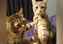 These cats are so funny