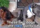 These dogs look very guilty