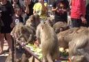 These monkeys are having the best birthday