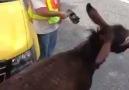 The Ultimate Rage Donkey