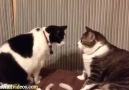 The World's Funniest Cat Video Compilation