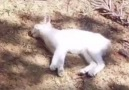 They Found A Cat Who'd Fallen Off A Balcony. But What They See...