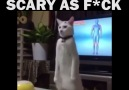 THIS CAT IS SCARY AS F**K