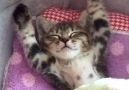 This Cat Waking Up Is Too Cute