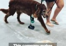 This company makes new legs for animals! Credit goo.glAiJiSF