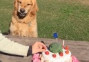 This dog does NOT like people touching his birthday cake...