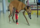 This Dog Has a 3D Printed Prosthetic Leg