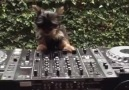 This dog is djing better than