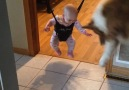 This dog is showing his baby sister exactly how to use her new toy!