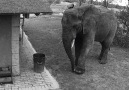 This elephant was caught on camera tidying up rubbish