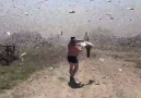This huge swarm of locusts is like a real-life nightmare Newsflare
