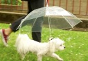 This is actually an umbrella for your dog