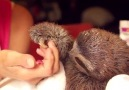 This is a ROMANTIC baby SLOTH!