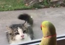 This is AWESOME !!! Parrot playing peekaboo with the cat from across the street