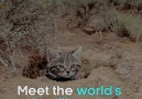 This is the world&DEADLIEST cat. Seriously. Look at her.