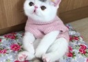 This kitty needs a hug