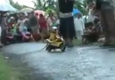 This monkey shocked the audience