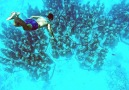 This Underwater Art Museum Is Revitalizing Ocean Life