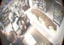 Tiger Walks Right Into This Store! Caught On Surveillance Came...