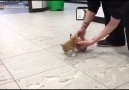Tiny disabled kitten gets a makeshift wheelchair
