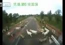 ( 18) Tır keçi sürüsünü ezdi geçti !!