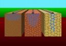 Toprak Yapısı