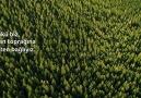TORKU - Dünya Ormancılık Günü ve Orman Haftası Kutlu Olsun! Facebook