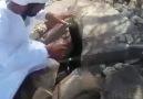 Torlak Arıcılık - Arabistan her taraf dağ taş bu arı bu...