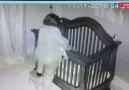 Torununu Uyutup Beşiğine Koyan Babaanne..)#