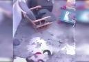 Tospik Baby - Kahraman kedi bebeğin merdivenlerden...