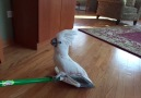 Try not to laugh at these crazy birds!